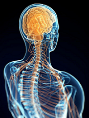 cervicale e sistema nervoso