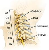 regione cervicale